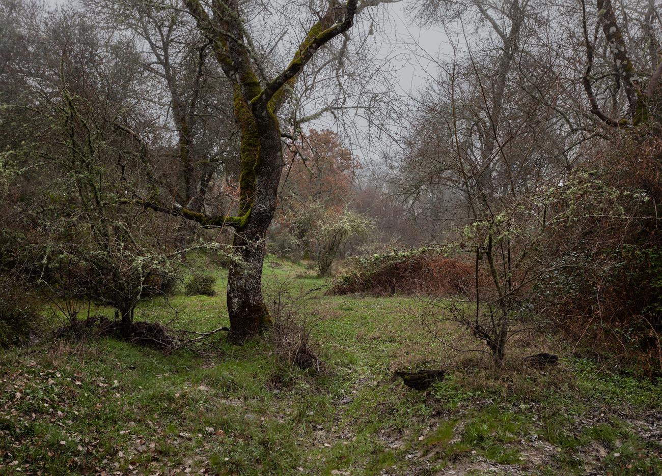 Arboles y espinos. Arroyo v1.0 reencuadre
