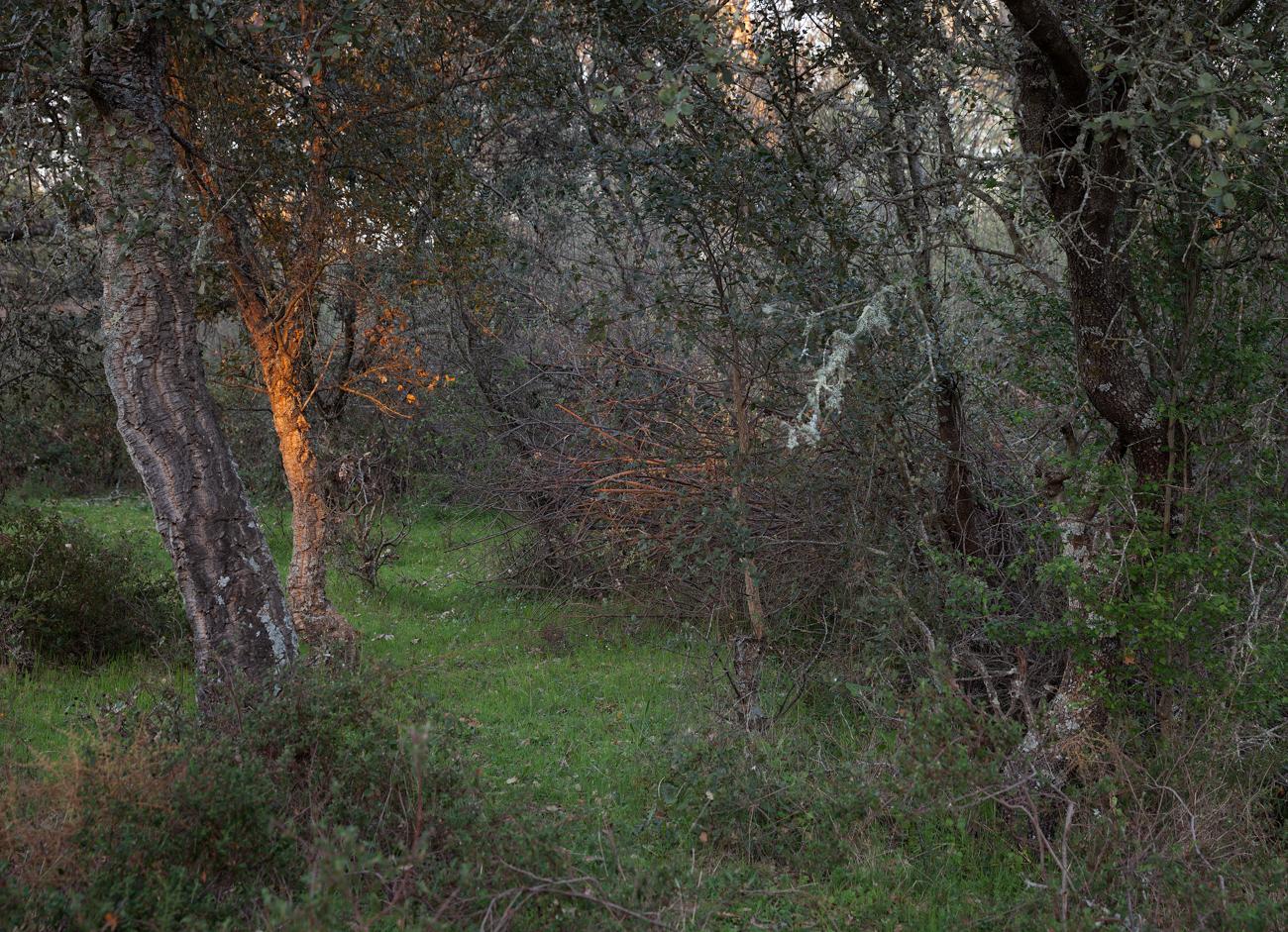 Arroyo. Linde con el Arenal del Lobo v1.a bis