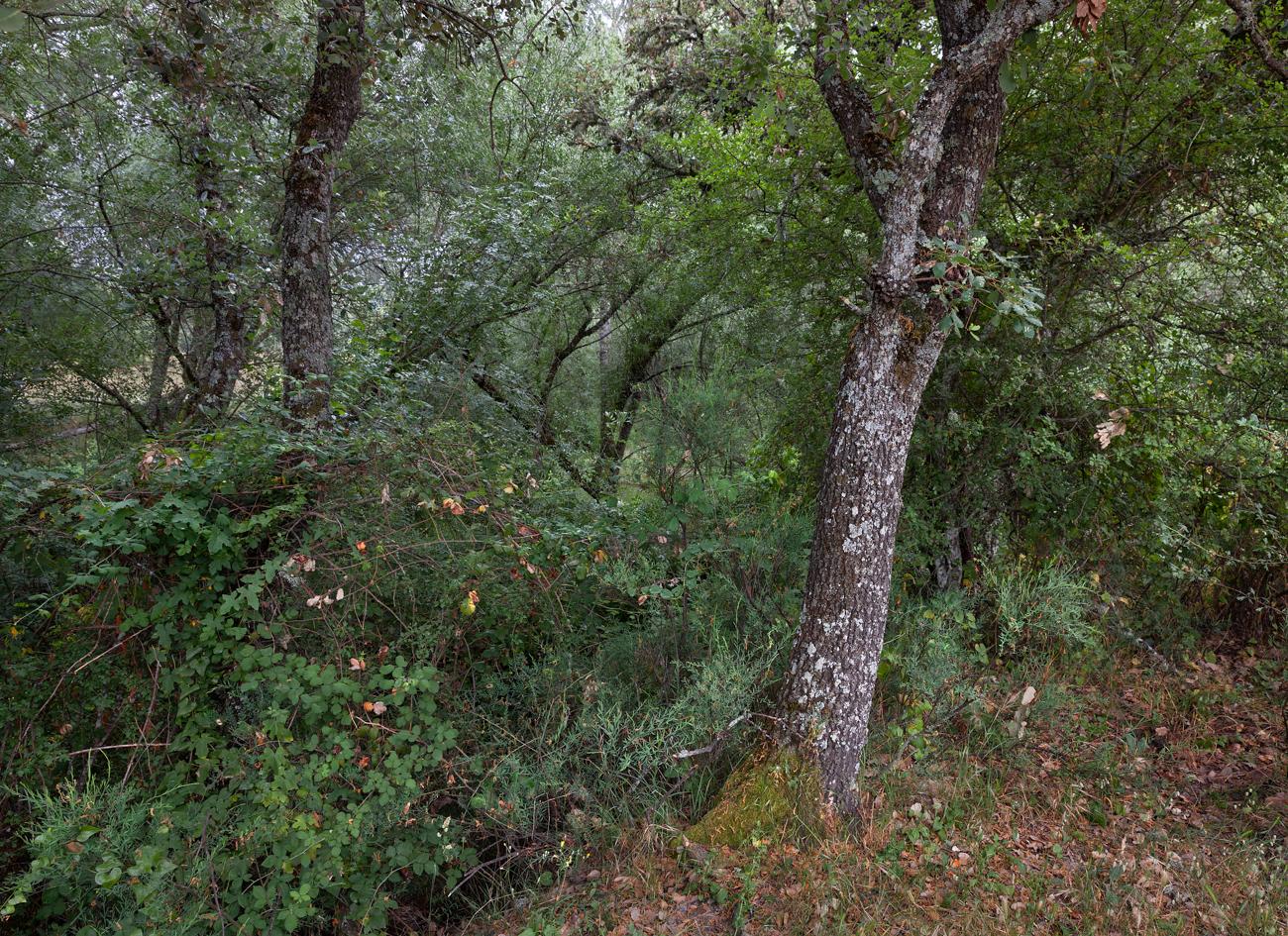 Arroyo - Zarza  y hojas secas